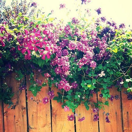 КОВАНЫЕ ЭЛЕМЕНТЫ Фото - кованые подставки под цветы